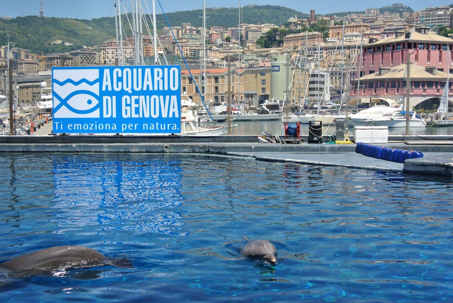 Delfini.thumb.JPG.4dcf5097e55f46f6eacae2