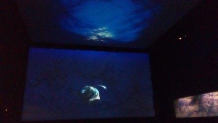 akvarijum1.jpeg