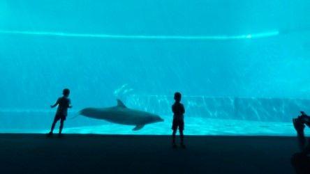 akvarijum11.jpeg