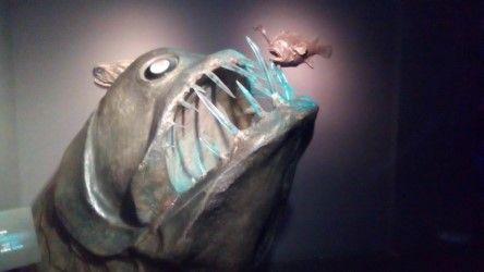 akvarijum12.jpeg