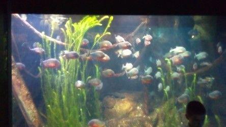 akvarijum13.jpeg