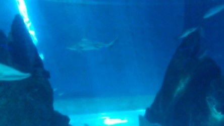 akvarijum8.jpeg