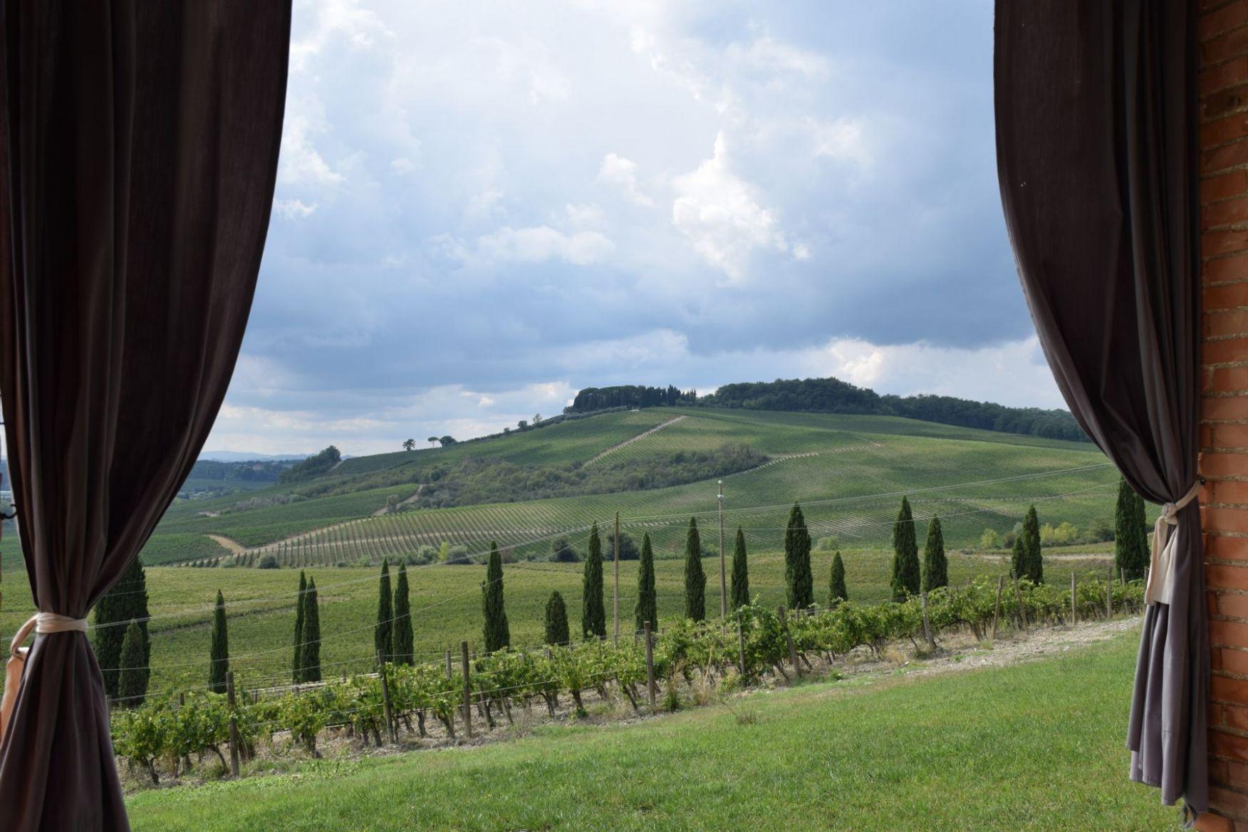 vinogradi.thumb.JPG.0f66309c5355fbd71dda