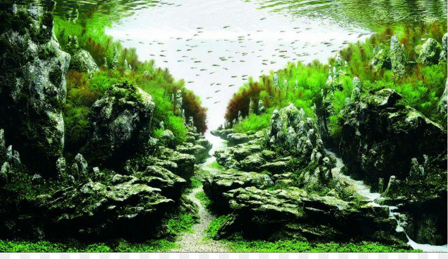 kisspng-ada-malaysia-aquascaping-aquatic-plants-aquarium-c-aquarium-5ab94e1f3adc39.7377177715220935992411.jpg